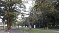 Instituto Butantan II