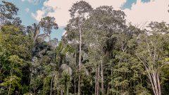 Cachoeira das araras, cidade Monte Negro/Rondonia. Foto: Cecília Bastos/USP Imagem.