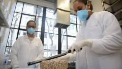 Letícia P. Rabelo e Gabriela Oda, alunas de iniciação científica da faculdade de medicina no laboratório de envelhecimento fazendo manipulação de encéfalos no banco de encéfalos. foto Cecília Bastos