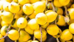 Legumes vendido em Feira livre . Foto: Cecília Bastos/USP Imagem