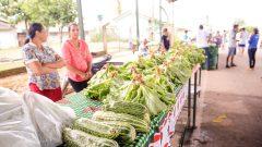 Feira livre da cidade de Monte Negro, Rondônia. Foto: Cecília Bastos/USP Imagem