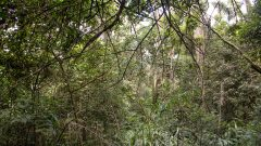 Detalhe de planta no bosque do Museu do Ipiranga Flora na cidade de São Paulo . Local: São Paulo/SP - Foto: Cecília Bastos/USPImagem