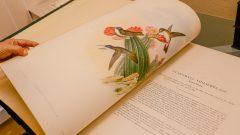 Detalhe de livro ilustrado da Biblioteca do Museu Zoologia da USP. Foto: Cecília Bastos/USP Imagem