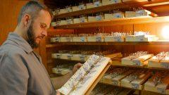 Renato Oliveira , técnico de laboratório de borboletas e mariposas fazendo montagem das borboletas para estudo no Museu de Zoologia. Foto: Cecília Bastos/USP Imagem