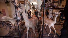 Museu de Zoologia - Acervo e visita - Foto: Cecília Bastos/USP Imagem
