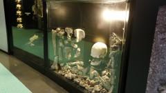 Museu de Anatomia Professor Afonso Bovero (ICB-III) – Reinauguração