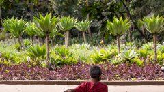 Homem no banco de jardim do Bosque do Museu do Ipiranga - Local: São Paulo/SP - Foto: Cecília Bastos/USPImagem