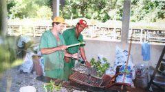 Plantio da horta dos funcionários da Prefeitura do Campus da USP Ribeirão Preto, 29/09/2000