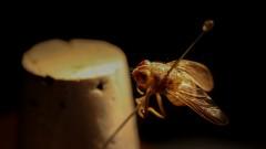 Entomologia Forense