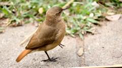 Fauna na USP