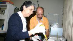 Profs Klaus Hartfelder e Zilá Simões, da FMRP