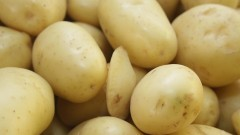 Batatas – Tubérculo