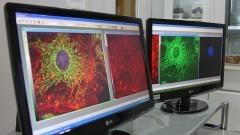 Laboratório de Biologia Tumoral – ICB