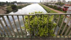 Marginal do Rio Pinheiros