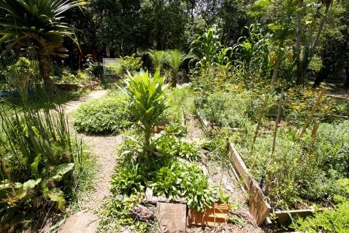 Horta Urbana (parte II)