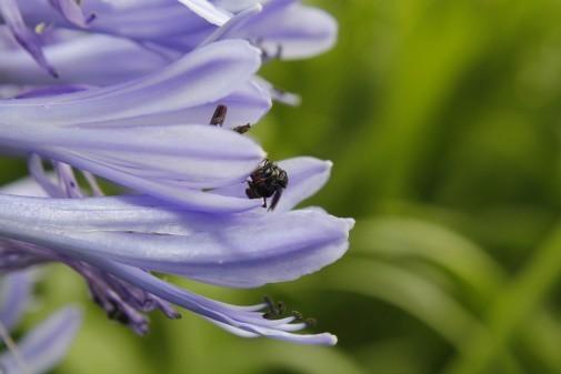 Insetos e flores na USP