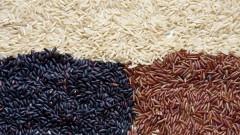 Grãos de arroz integral – FCF