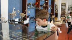 Museu de Anatomia Veterinária – FMVZ