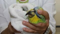 Ambulatório de Aves