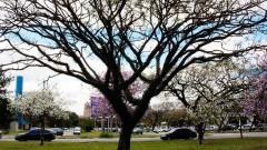 Vegetação I – Campus da Capital