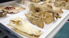 Museu de Arqueologia e Etnologia – Zooarqueologia no MAE