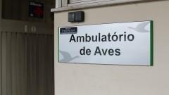 Ambulatório de Aves do Hospital Veterinário da USP