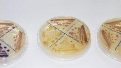 Laboratório de Astrobiologia – Instituto de Química (IQ)