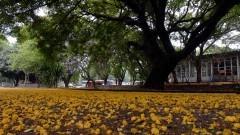 Flora VI – Campus da Capital