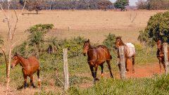 Setor de aquicultura - Cavalo no campus de Pirassununga. Foto: Cecília Bastos/USP Imagem