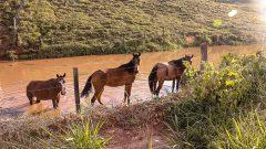 Cavalo de Pasto. Foto: Cecília Bastos/USP Imagem