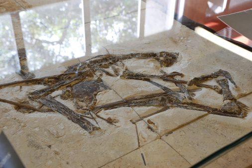 Exposição Fósseis do Araripe no Instituto de Geociências