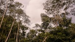 Floresta Amazônica. Foto: Cecília Bastos/USP Imagem