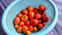 Frutas típicas brasileira. Foto: Cecília Bastos/USP Imagem