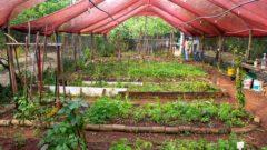 Horta das Flores na Mooca II