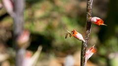 Vegetação da Serra do Cipó – IB