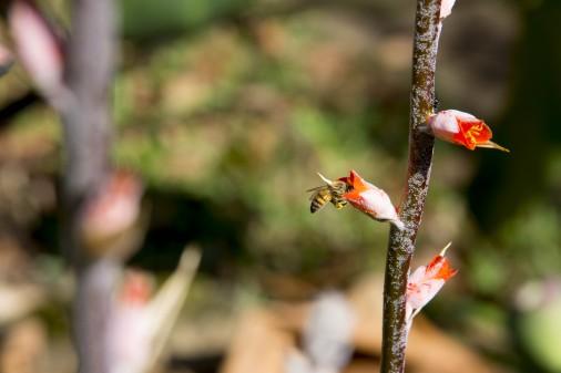 Vegetação da Serra do Cipó – Instituto de Biociências