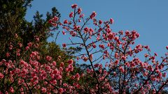 Jardim Japones da USP. Foto: Cecília Bastos/USP Imagem