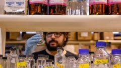 Laboratório de Divisão Bacteriana