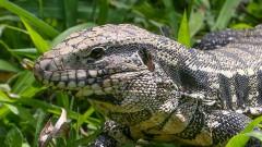 Fauna – Animais encontrados na Universidade