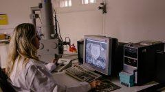 Lara Guimarães no laboratório de Microscopia Eletrônica no Museu de Zoologia. Foto: Cecília Bastos/USP Imagem