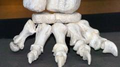 Exposição Cabeça de Dinossauro – MZ