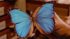 Acervo de coleções de borboletas no Muzeu de Zoologia. Foto: Cecília Bastos/USP Imagem