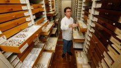 Acervo de coleções de insetos no Muzeu de Zoologia. Foto: Cecília Bastos/USP Imagem