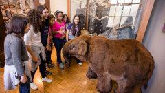 Visita dos alunos do ensino fundamental ao Museu de Zoologia. Data: 29.05.2019 - Local: Museu Zoologia - São Paulo/SP - Foto: Cecília Bastos/USPImagem