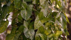 Plantas brasileiras. Foto: Cecília Bastos/USP Imagem