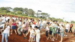 Plantio de mudas de Ipês na FDRP, 2010