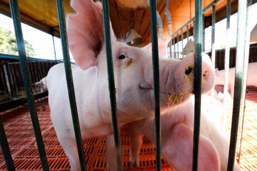 Animais no Campus de Pirassununga