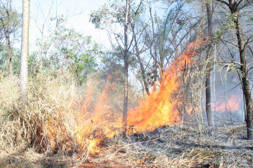 Queimada na mata da USP de Ribeirão Preto, 2006