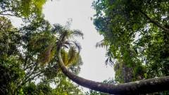 Trilha do Núcleo Pedra Grande do Parque Estadual da Cantareira. foto Cecília Bastos