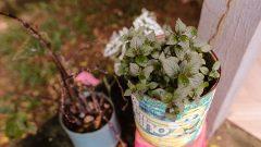 Vasos de plantas . Foto: cecília Bastos / Usp Imagem